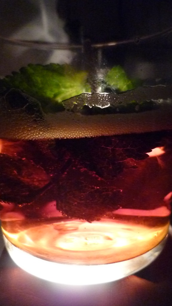 Mint in the Cider side of Beer