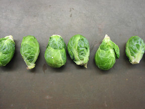 Sprouts-in-a-row
