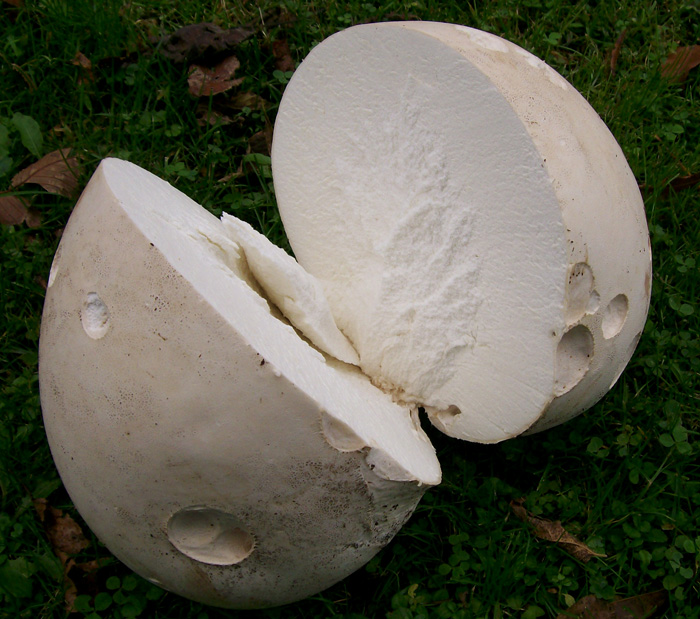 Sauteed Giant Puffball or King Oyster Mushrooms