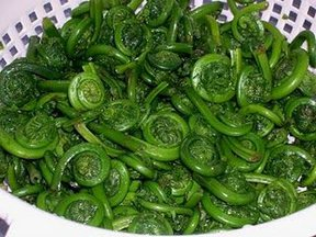 Foraged Fiddleheads