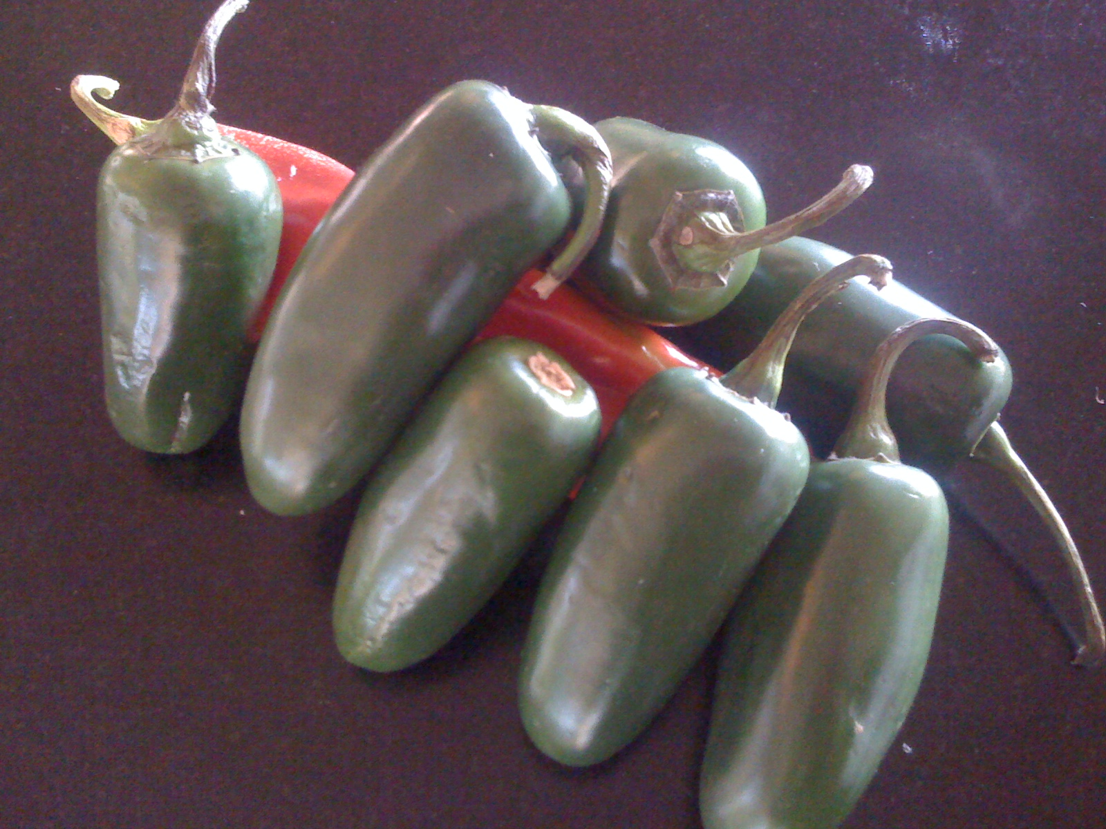 JALEPENO PEPPER BITES
