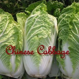 Chinesecabbage