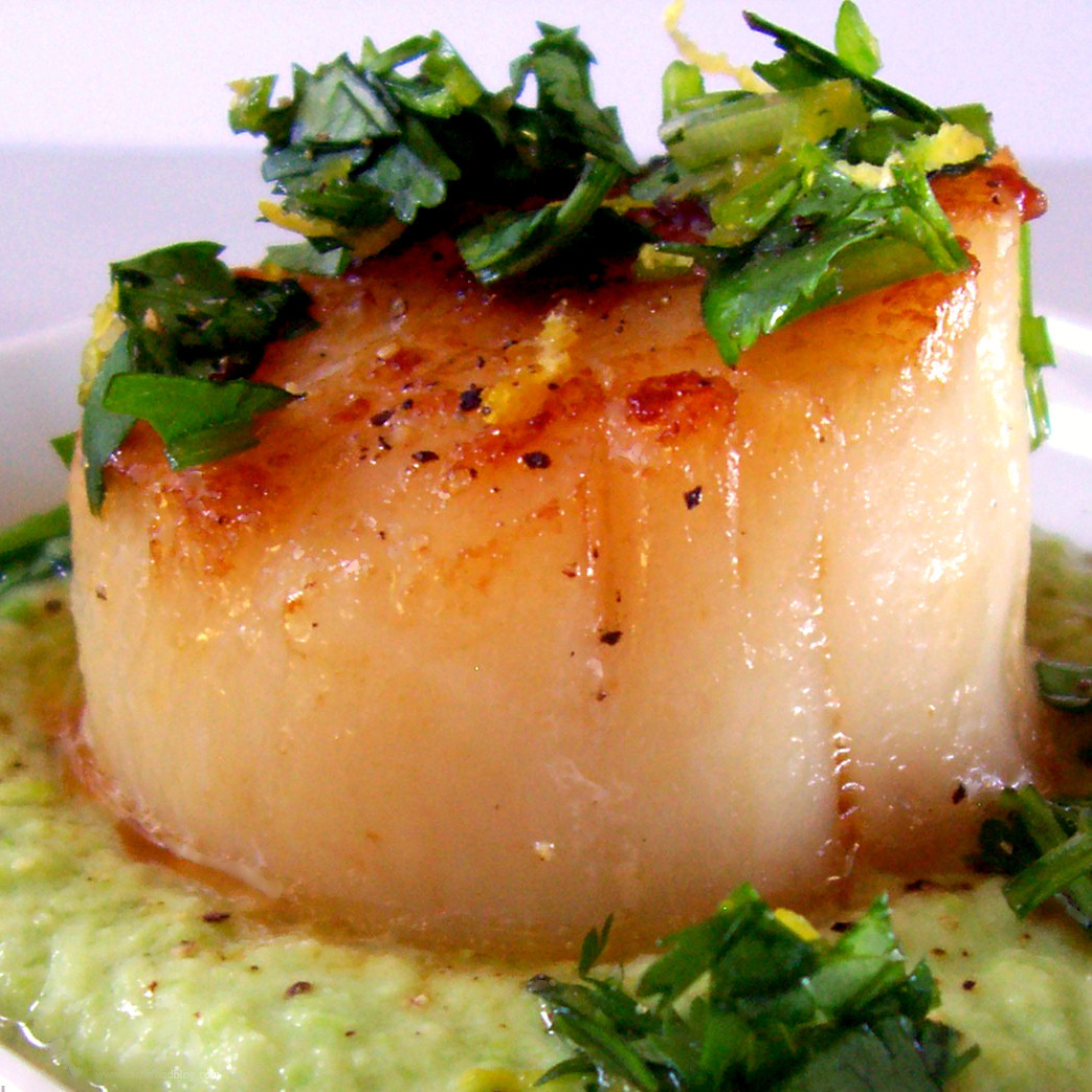 Seared Sea Scallops with Gingered Pea Purée and Cilantro Gremolata