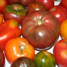 Heirloom_tomatoes.14813213