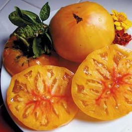 Heirloom_tomato2