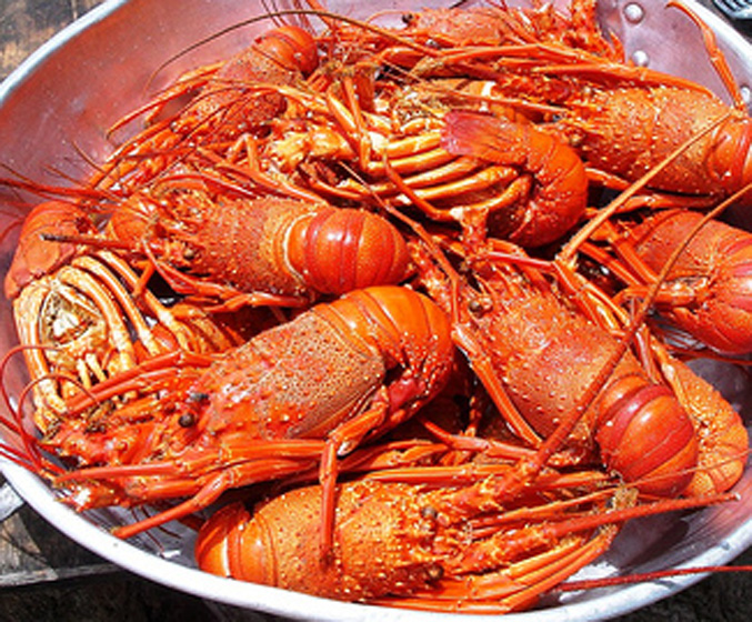 Lagosta Suada - Portugal - Lobster in Tomato and wine sauce