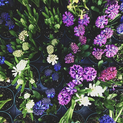 Put a Filter on It: Flowers