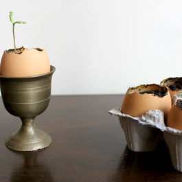 Sprouting Seedlings in Eggshells