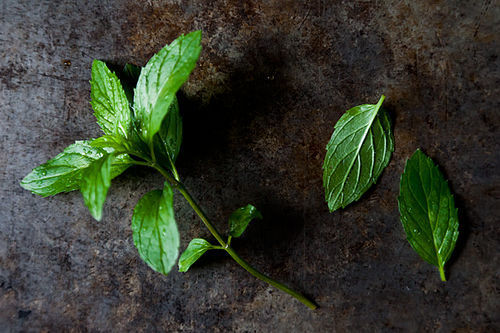 300_your_best_recipe_with_mint