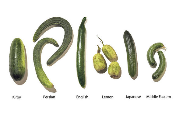 Knowyourcukes