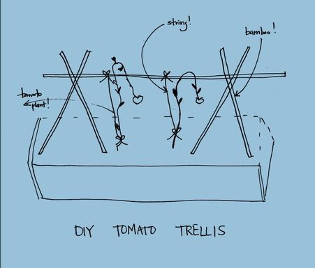 Diy_tomato_trellis