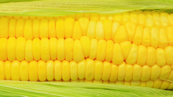 1280-monsanto-corn-wal-mart-genetically-modified-debate