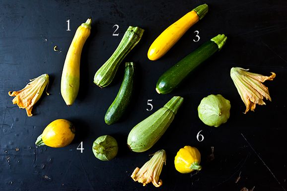 Summer_squash_1
