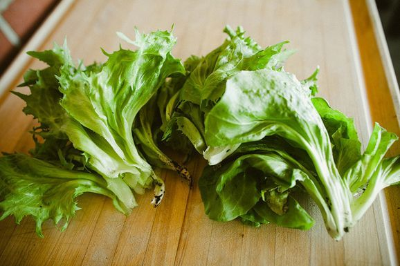 Escarole_harvested