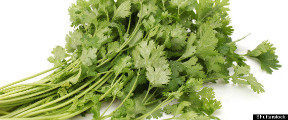 R-cilantro-gene-large570