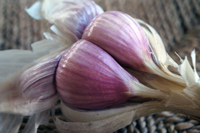 Beck_garlic_feature