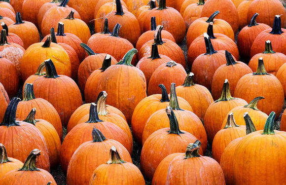 Pumpkins-npr