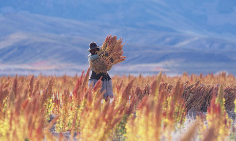 Quinoa-harvest-in-bolivia-008