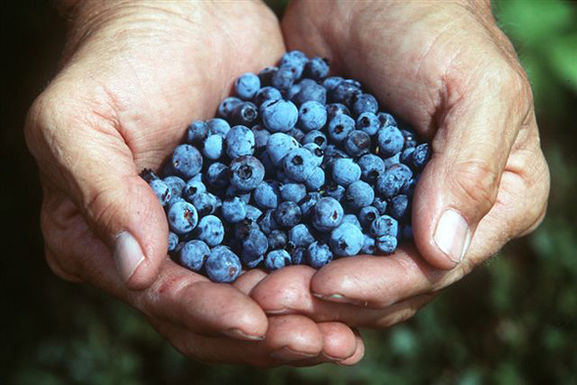 Holding-fresh-blueberries