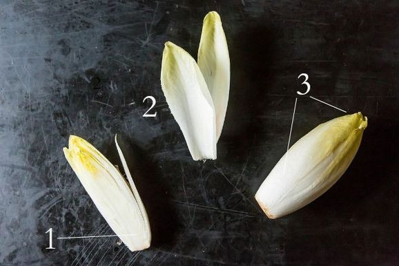 Endive2