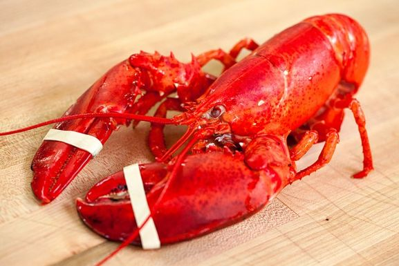 Lobster-video-653x436