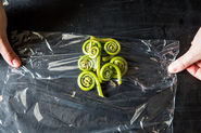 Fiddlehead Fern: A Controversial Coil