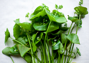 Miner&#x27;s Lettuce