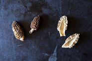Morels: Perhaps Not Mushrooms, But Still Fungi