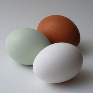 Eggcolors