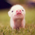 Lil_piggy