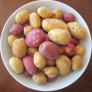 42potatoes