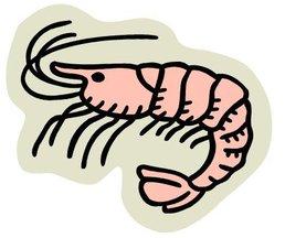 Ca-shrimp08