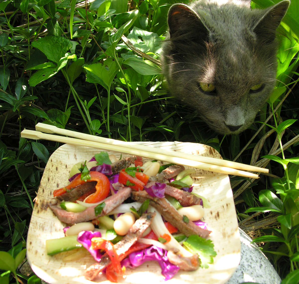 A salad my cat and I love