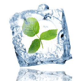 Ice_cube_with_leaf