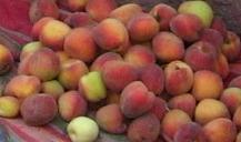 Peach Tomato Tart