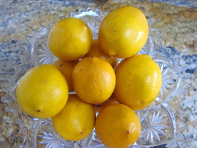 Meyer_lemons_for_curd