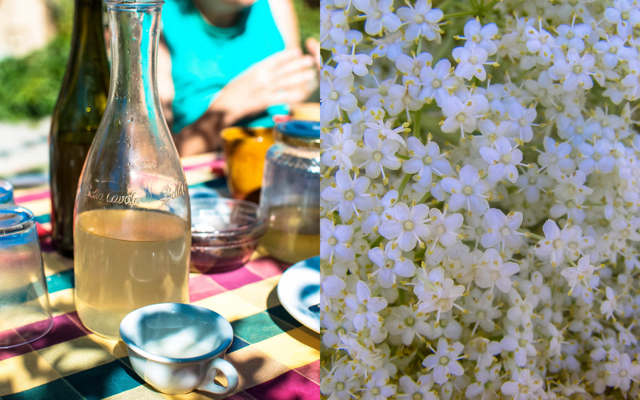 Elderflower Syrup & Cordial