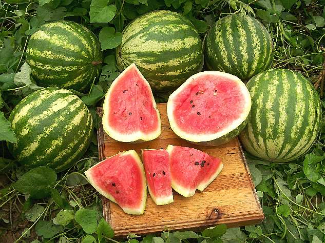 "Watermelon ""Caprese"""