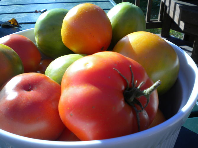 Fall Harvest Tomato Galettes