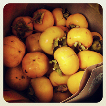 Bag-o-persimmons