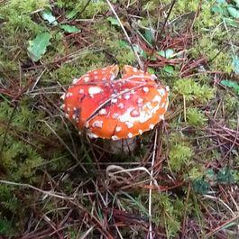 Mushrooms by maiolicagirl