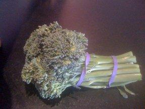 Broccoli_016