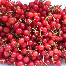 Sour Cherry Granita
