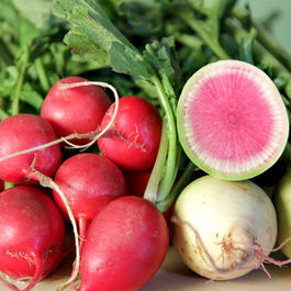 Radish-top soup and slow-roasted radish roots with fennel