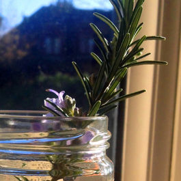 Sunshine-on-my-rosemary