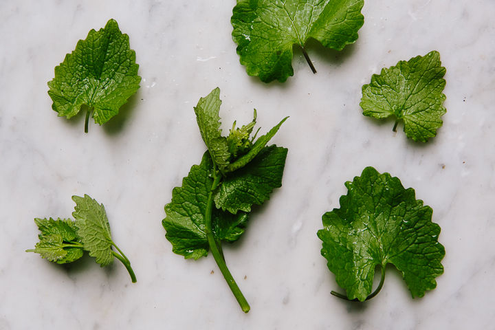 Garlic Mustard Pesto