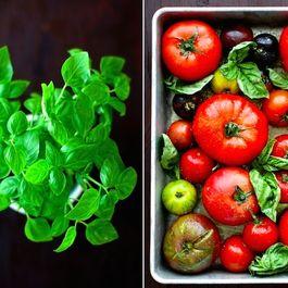 Tomato-soup-fop-2