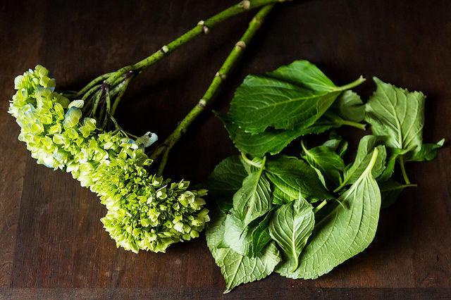 Plantrecipe_greens