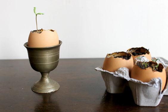 Sprouting Seedlings in Eggshells