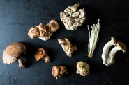 All About Wild Mushrooms